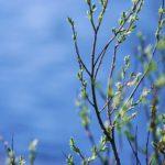 spring stuff